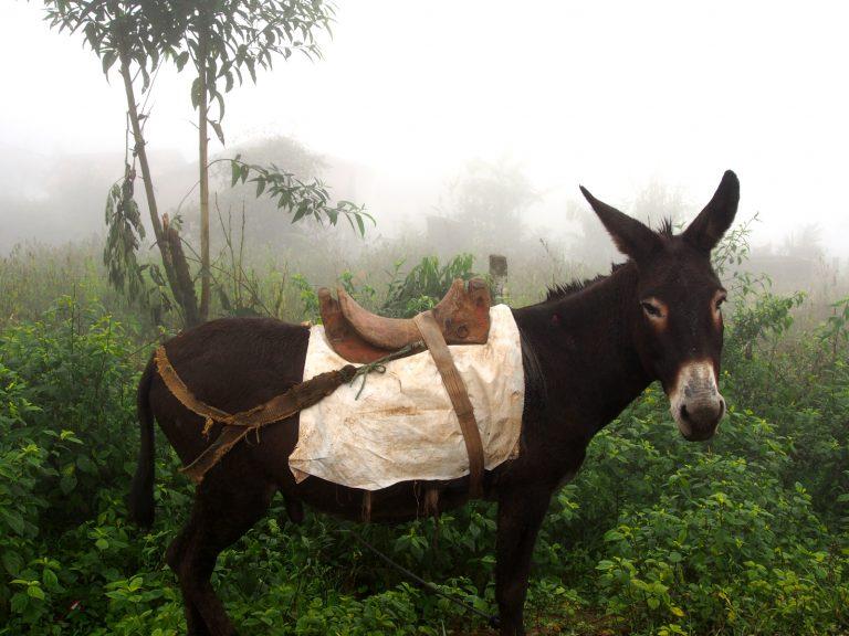 Doprava v ekvádorských horách