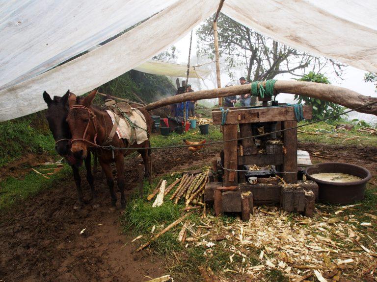 Panela. Sladký pohon všech Ekvádorců