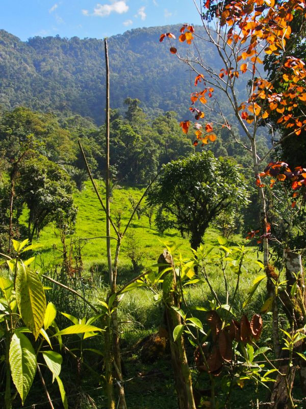 Divné oblíbené zvyky Ekvádorců