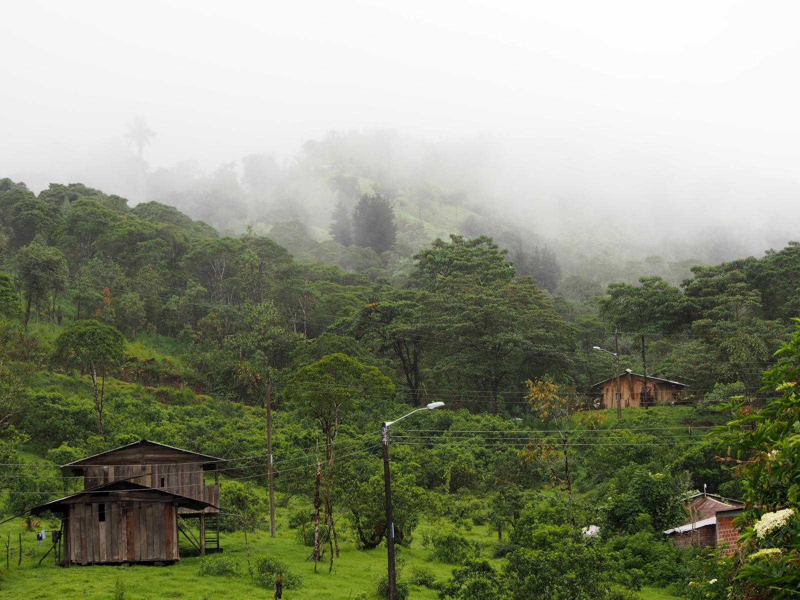 Cesta do subtropů a terapeutická džungle
